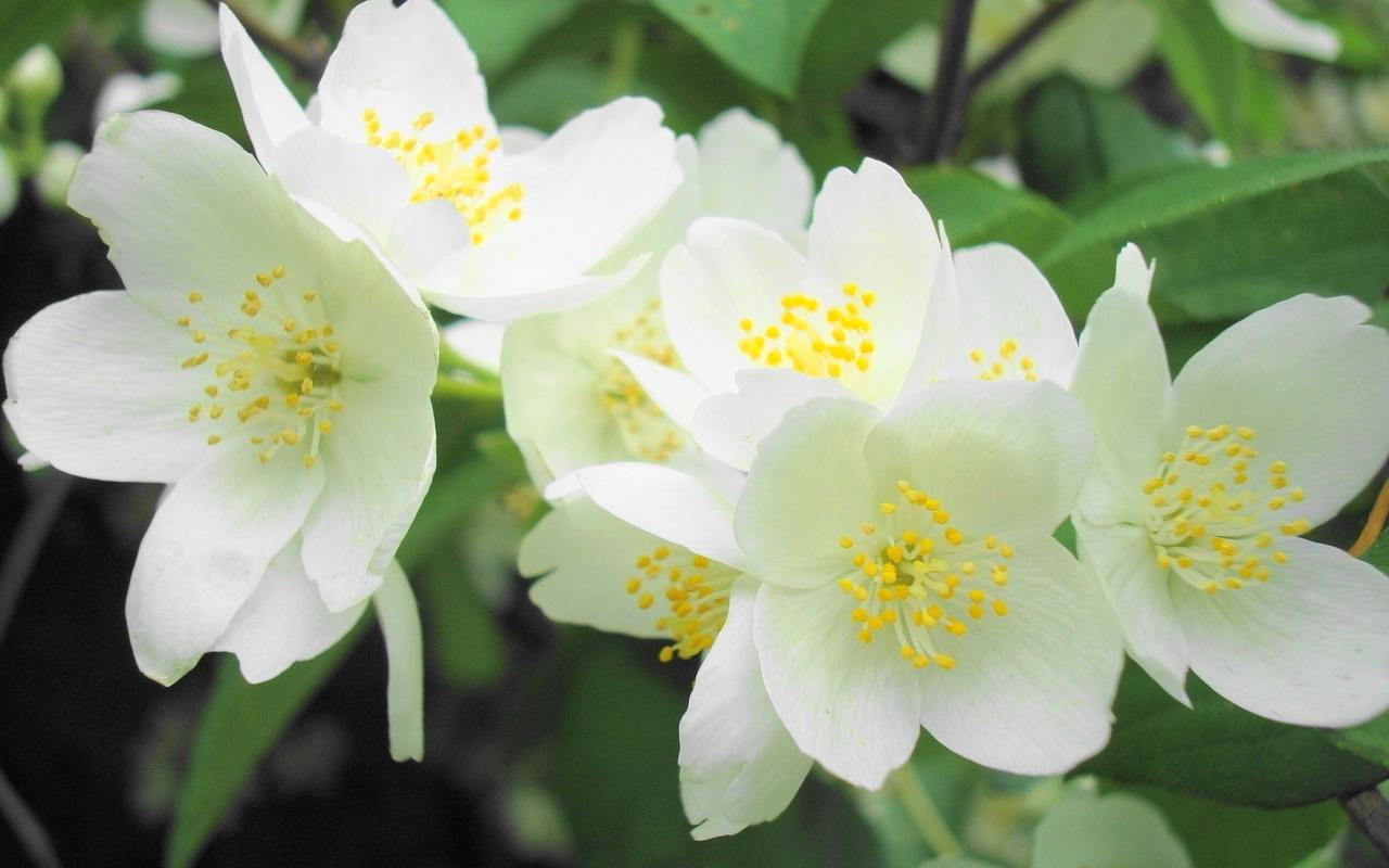 Комнатные и садовые цветы и растения почтой