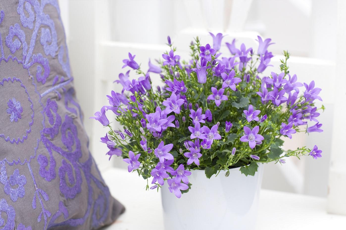 Как ухаживать за цветами жених