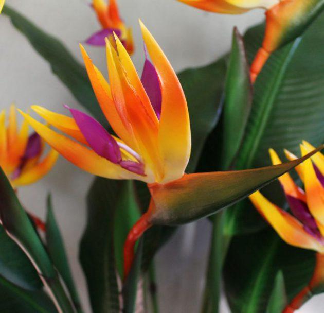 цветок стрелиция
